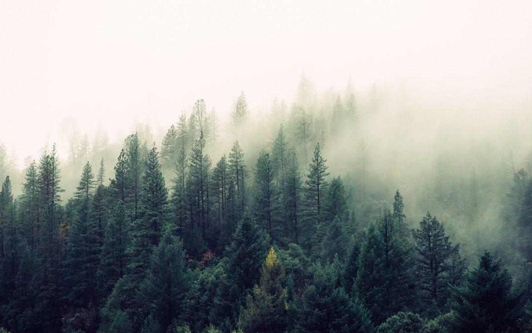 10 nachhaltige Ideen für den (Studi-) Alltag